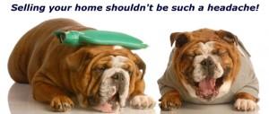 Puppy with headache!-610-wide